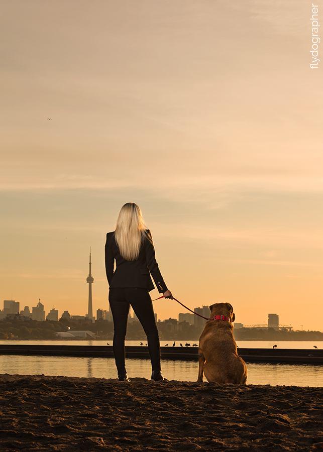 Premier Toronto dog photographer
