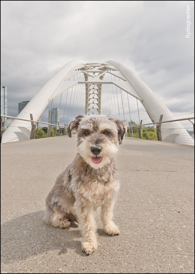 Destination Toronto dog photographer