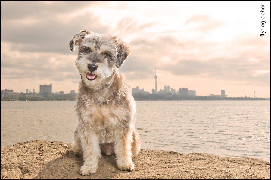 Travel Toronto dog photographer